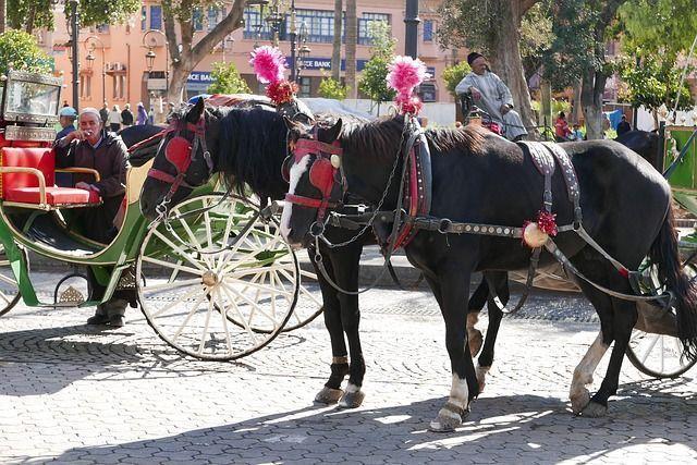 Viajar a Marruecos con niños.