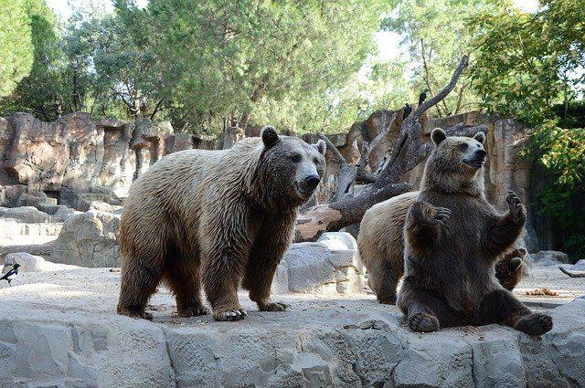 entradas al zoo de madrid