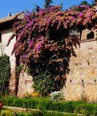 visita al centro de Granada